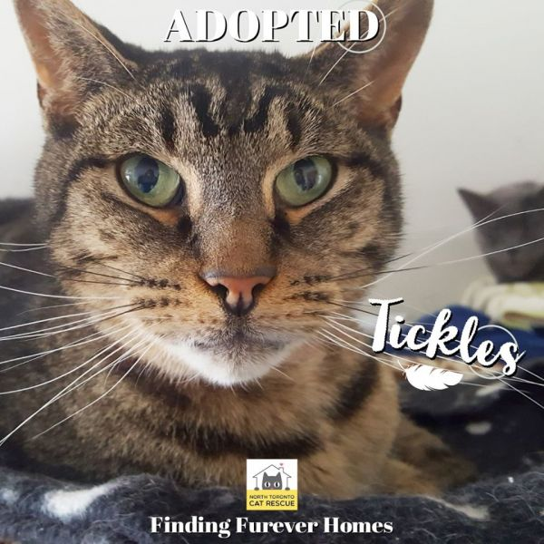Tickles-Adopted-on-May-2-2020