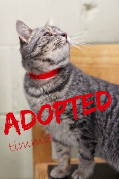 Timmie - ADOPTED - January 13,2017