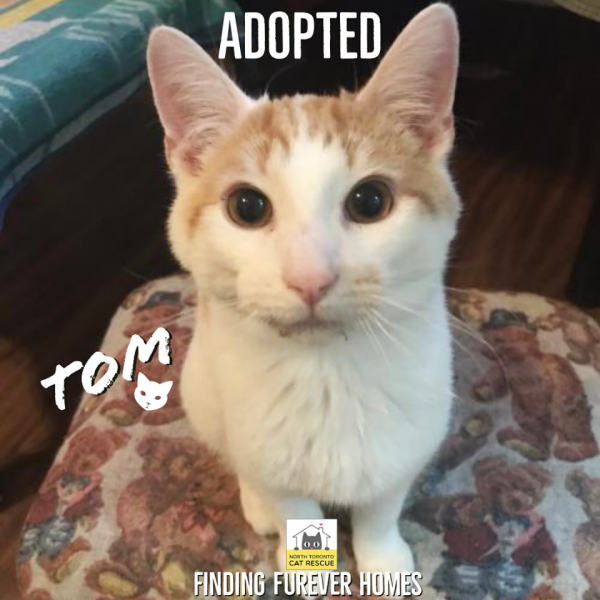 Tom-Adopted-on-January-5-2020-with-Jerry