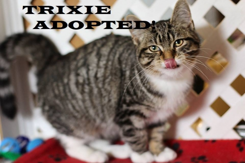 Trixie - Adopted on February 8, 2019 with Dice