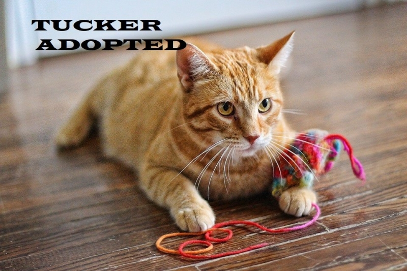 Tucker - Adopted on January 12, 2019