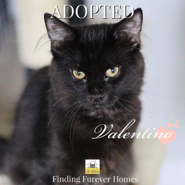 Valentino-Adopted-on-October-19-2019