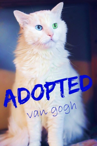 Van Gogh - ADOPTED - March 26, 2017