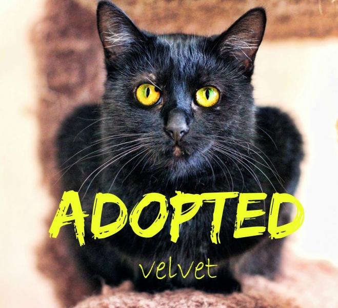 Velvet - ADOPTED - February 3, 2017