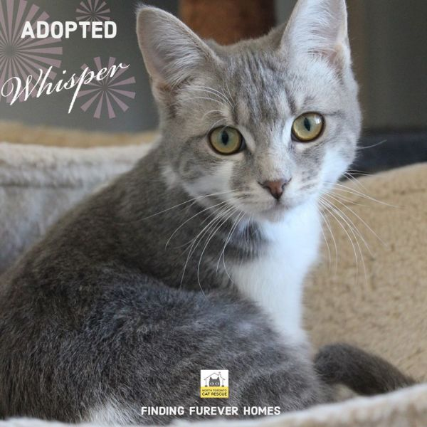Whisper-Adopted-in-2020-with-Asia-and-Kylie