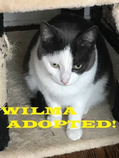 Wilma - Adopted on November 10, 2018