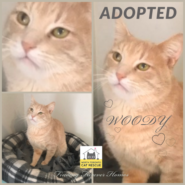 Woody-Adopted-on-May-18-2019