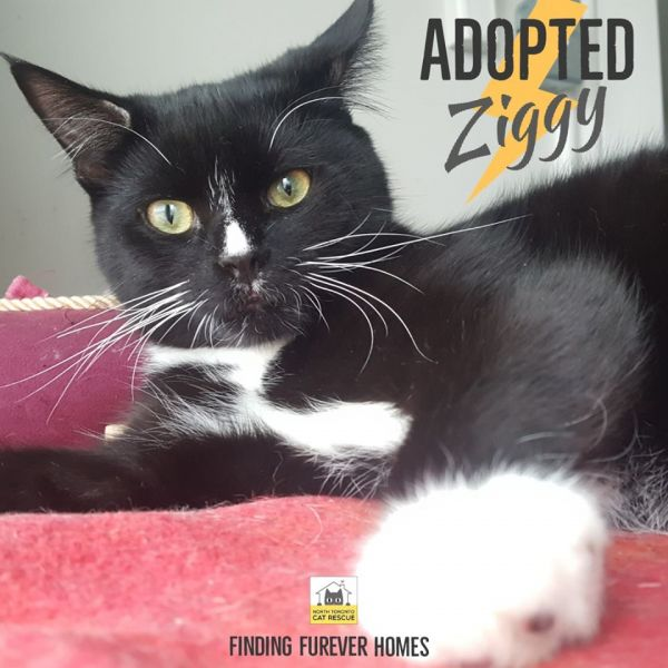 Ziggy-Adopted-in-2020-with-Carmella