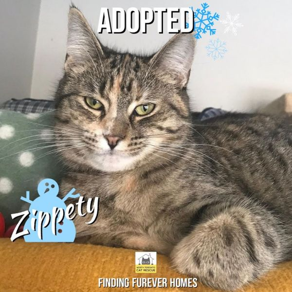Zippety-Adopted-on-December-21-2019-with-Shandi