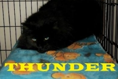 Thunder-Adopted-on-March-17-2019