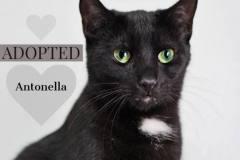 Antonella-Adopted-on-August-1-2019-with-Magdalena