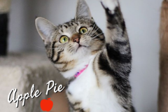 Apple-Pie-Adopted-on-March-7-2020-with-Cutie-Pie