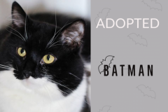 Batman-Adopted-on-April-5-2019-with-Kalahari