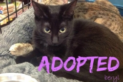 Beryl - ADOPTED - March 18,2017