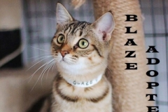 Blaze - Adopted on January 20, 2019