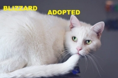 Blizzard - Adopted - July 11, 2018