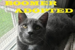 Boomer - Adopted - September 22, 2018 with Dickens
