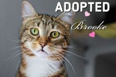 Brooke-Adopted-on-January-25-2020-with-Tucker