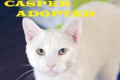 Casper - Adopted - September 9, 2018