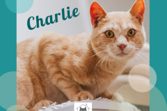 Charlie-Adopted-on-July-27-2019