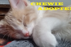 Chewie - Adopted - October 11, 2018