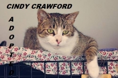 Cindy Crawford - Adopted - December 16, 2017
