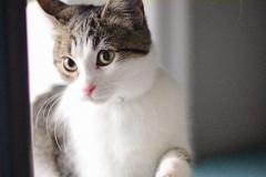 Clara - Adopted - October 15, 2018