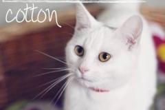 Cotton4A