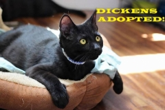 Dickens - Adopted - September 22, 2018 with Boomer