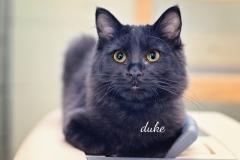 Duke4