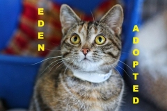 Eden - Adopted - April 8, 2018 with Bijou