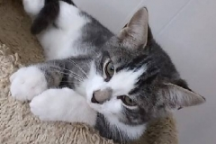 Elmo - Adopted - August 28, 2017