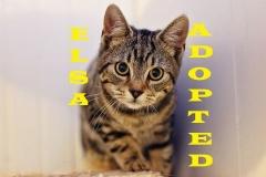 Elsa - Adopted - February 10, 2018