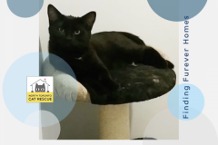 Gabriel-Adopted-on-April-6-2019