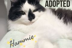 Hammie-Adopted-on-February-16-2020