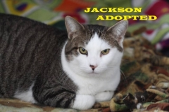 Jackson - Adopted - September 1, 2018