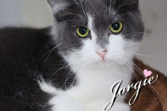 Jorgie-Adopted-on-March-21-2020-with-Snickers