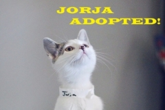 Jorja - Adopted - September 24, 2018 with Maggie