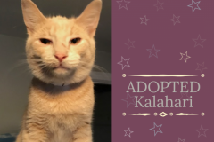 Kalahari-Adopted-on-April-5-2019-with-Batman