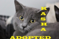 Kasha - Adopted - January 27, 2018
