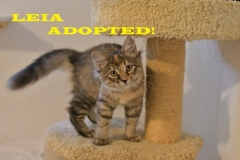 Leia - Adopted on October 26, 2018