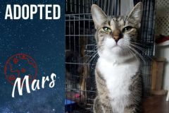 Mars-Adopted-on-August-3-2019