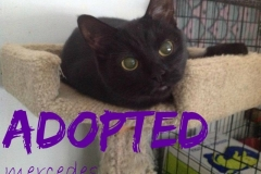 Mercede - ADOPTED - January 7,2017
