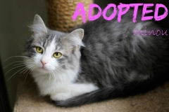 Minou - ADOPTED - March 15,2017