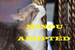 Minou - Adopted - January 30, 2018