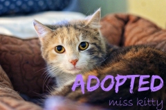 Miss Kitty - ADOPTED - April 23,2017