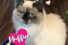 Muffin-Adopted-on-December-14-2019