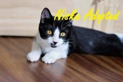 Niska - Adopted - September 12, 2017