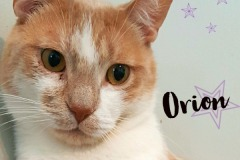 Onrion-Adopted-on-June-8-2019