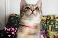 Penny-Adopted-on-February-22-2020